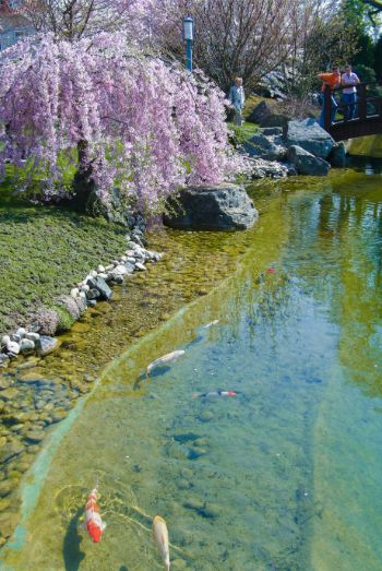 pond at Japanese Garden in Bad Langensalza, Germany