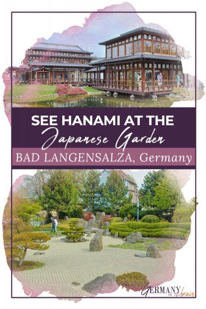 See Hanami at the Japanese Garden in Bad Langensalza, Germany