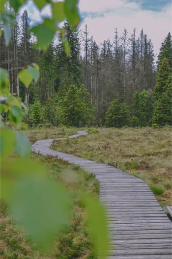 trail through the moors in the Harz, Germany