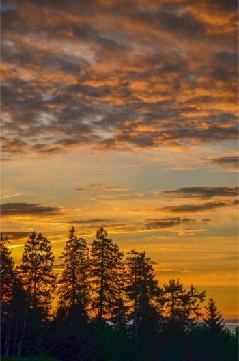 sunset over pine trees in the Harz mountains, Germany