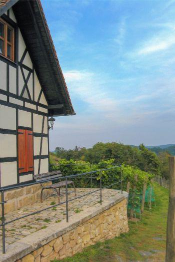 historic vinyard at Leuchtenburg Castle, Germany