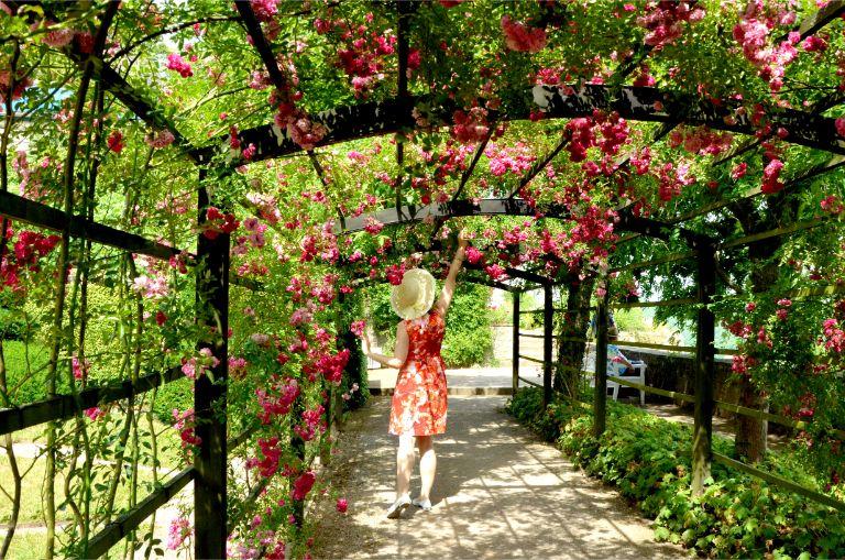 rose walk at Dornburg Castles, Germany