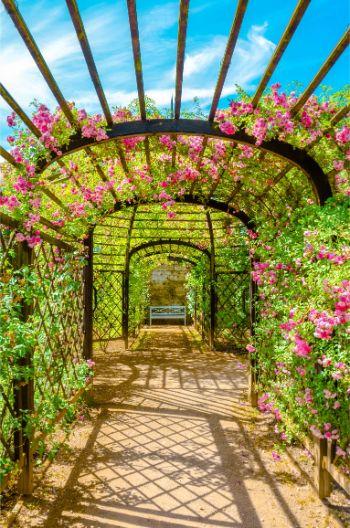 rose garden at Dornburg Castle in Germany