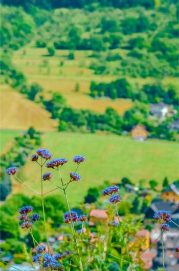 view from Dornburg Castle, Germany, in summer with flowers
