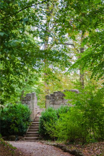 summer foliage above the tower ruin at Castle Kochberg in Germany