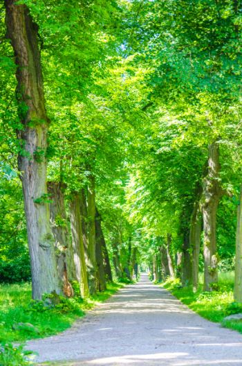 green alley around Weimar, Germany